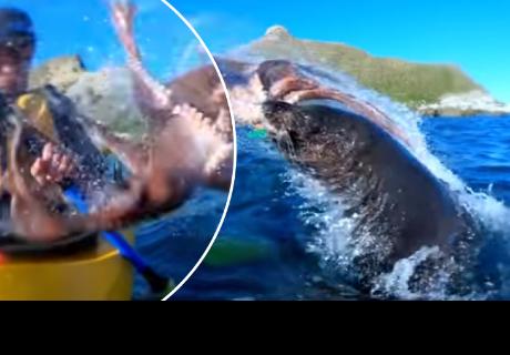 Joven es 'abofeteado' por una foca y un pulpo cuando hacia canotaje