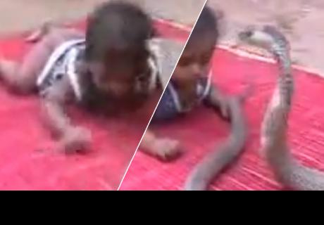 Padre dejan a su bebé al 'cuidado' de una cobra y el final te sorprenderá