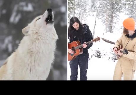 Jóvenes fueron a cantar en un santuario de lobos, pero este fue el inesperado final