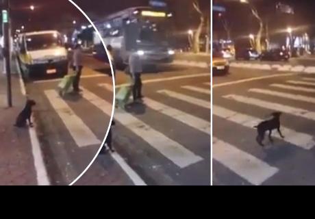 Perrito da gran lección a todos al esperar pacientemente luz verde del semáforo para cruzar