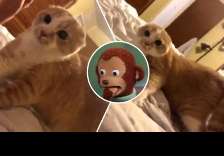 La reacción de este gato al ver a su dueña con crema en la cara te sacará más de una carcajada