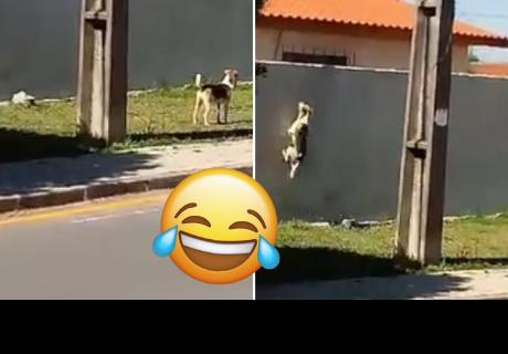 Perrito asombra a todos con su curioso método para salir e ingresar a su casa