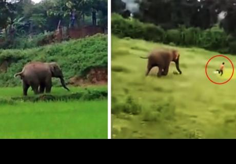 Elefante persigue a niño y tiene un trágico final en la India