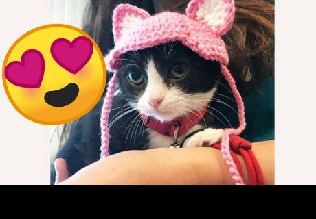 La conmovedora historia de un gatito sin orejas ni cola