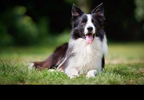 4 cosas que no sabías sobre los perros