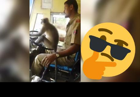 Un mono 'conduce' un autobús con pasajeros en la India