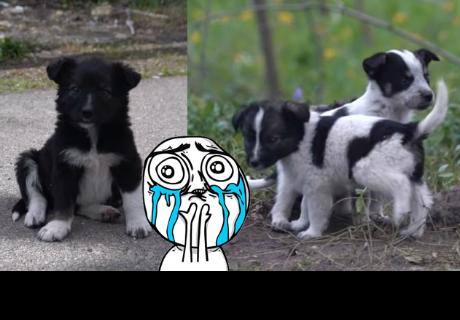En 'Chernóbil' podrías morir si te cruzas con estos cachorros