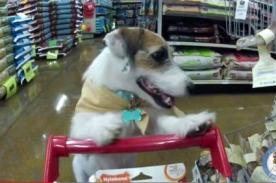 Perro que va de compras causa sensación en redes sociales [Video]