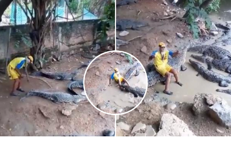 Entró al habitat de unos cocodrilos y se llevó el susto de su vida