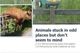 Animales atorados: Nueva tendencia en Facebook
