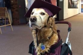 Perro se graduó junto a su dueña que sufre de parálisis - Fotos