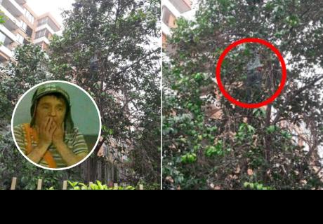 Mujer subió a un árbol a rescatar a su gata, pero las dos quedaron atrapadas