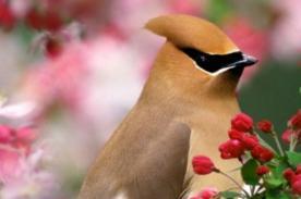 Poesía de primavera: Versos inspiradores para esta cálida estación