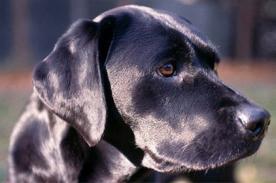 Increíble: Perro salva a una mujer de morir atragantada con un pedazo de chocolate