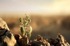 Científicos pronostican que dentro de 10 años se podrá cosechar en Marte