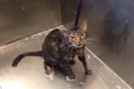 YouTube: Tierno gatito 'suplica' que no lo sigan bañando - VIDEO