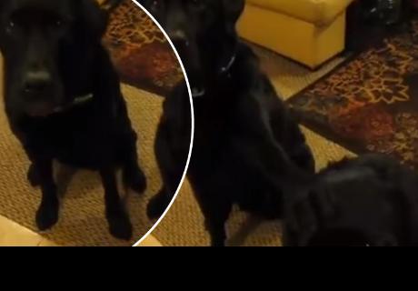 Dueña preguntó a sus perros quien robó las galletas y uno de ellos dio sorprendente respuesta