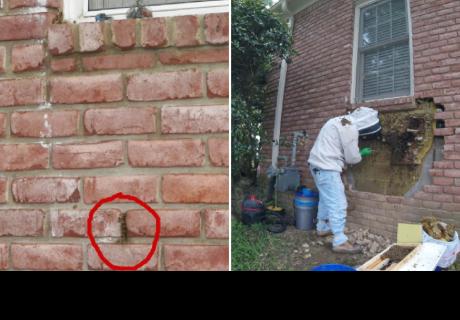 Descubren enorme panal de abejas al romper la pared de una casa