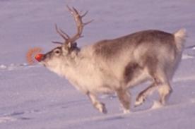 Feliz Navidad: Historia de Rodolfo, el reno de la nariz roja