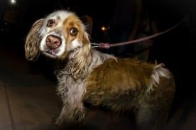 Ley contra el maltrato animal supera las 80 mil firmas