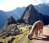 Machu Picchu es homenajeado por google con doodle