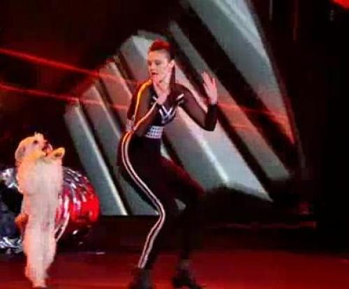 Video: Asombroso perrito bailarín ganó el concurso Britain's Got Talent
