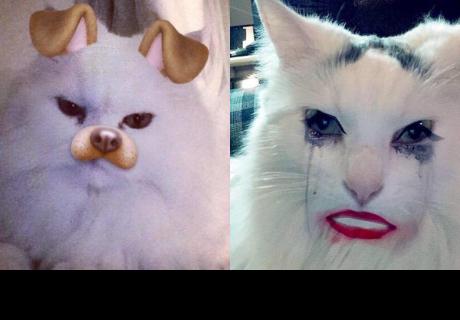 Snapchat lanzará sus primeros filtros para gatos