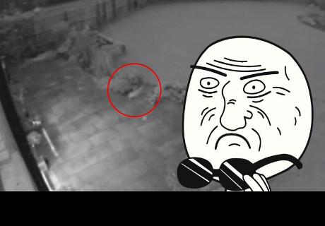 'Gato fantasma' pasea por un patio segundos antes de desaparecer
