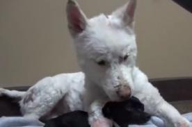 Conmovedor: Mira el emocionante rescate de una perrita abandonada - VIDEO