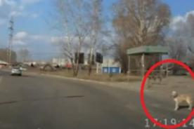 Increíble: Conductores se detienen para que perro pueda cruzar - Video
