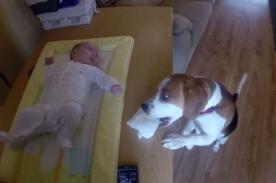 Adorable perro ayuda a mujer a cambiar pañales de su bebé - Video
