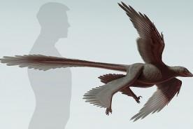 China: Hallan dinosaurio que tenía cuatro alas