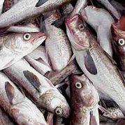 Semana Santa: Precio del pescado llegará a S/.1.50