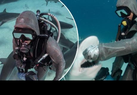 Mete sus manos a la boca de muchos tiburones, pero es por una buena causa
