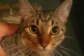 Brasil: Gato fue capturado mientras transportaba armas a una cárcel