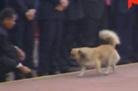 Parada Militar 2013: Pequeño perro se 'cuela' en el desfile - video