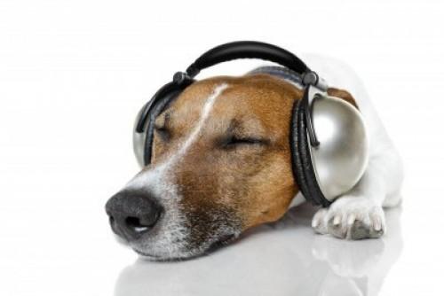Conociendo a tu mascota: La música clásica es la favorita de perros y gatos