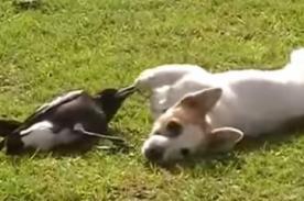 Adivina con quién juega este adorable cachorro ¡te sorprenderá! - Video