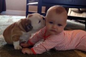Video: Cachorro muestra su afecto a bebé dándole besos en el cachete