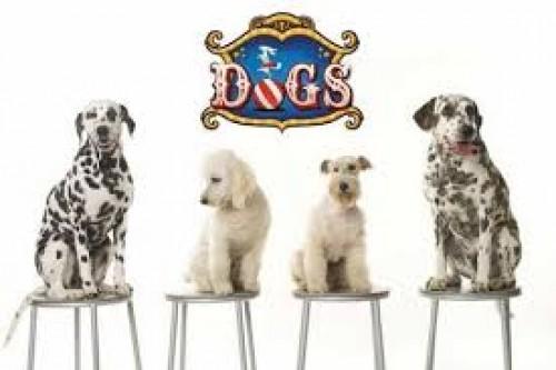 Dogs: Los perros famosos del cine llegan a Lima
