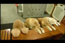 Viral: Perros rezan antes de comer y recogen sus platos - VIDEO
