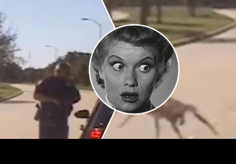 Araña gigante 'ataca' a policía y pasa el peor momento de su vida