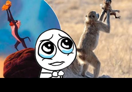 Monos enamoran a cibernautas al recrear escena de 'Rafiki' y 'Simba' de 'El Rey León'