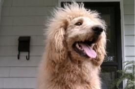 EEUU: Perro causa alarma tras ser confundido con un cachorro de león - Video