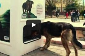 Mira la iniciativa de Turquía para ayudar a animales sin hogar [Video]
