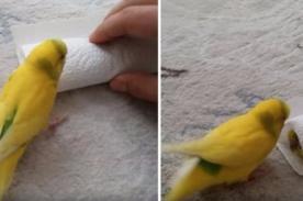 YouTube: Pájaro conmueve con tierno gesto tras muerte de su amigo - VIDEO