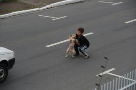 Conmovedor: Niño salva a perro de morir atropellado