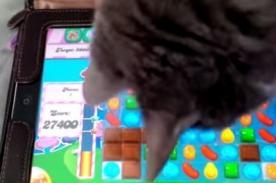 A los gatos también les gusta jugar Candy Crush - Video