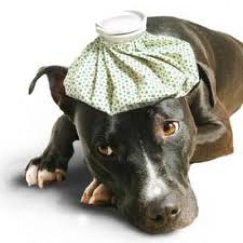 Conociendo a tu mascota: Identifica cuándo tu perro está resfriado
