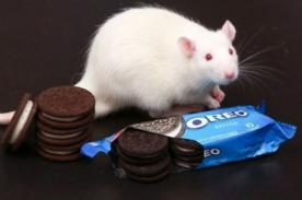 Galletas Oreo son tan adictivas como la cocaína, según estudio
